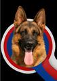 CKNO Meisterschaft für Deutsche Schäferhunde