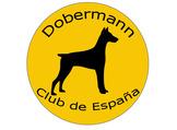 DCE Championship