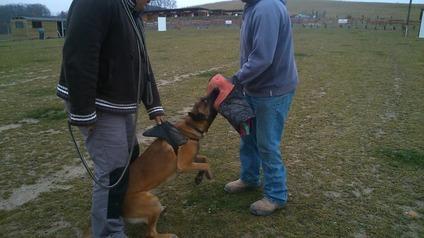 Hera des pas des Bêtes