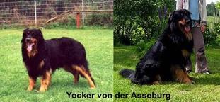 Yocker von der Asseburg