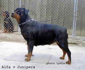 Alfa von Junipera