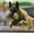 Dingo von der Brunnenstadt