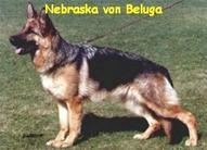 Nebraska von Beluga