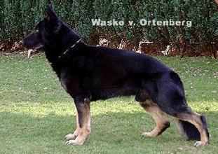 Wasko vom Ortenberg