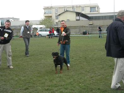 Loyal Dog Faima