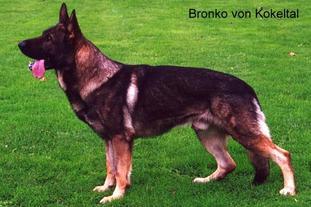 Bronko vom Kokeltal
