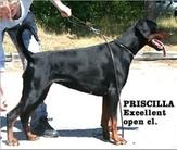 Mezzrow's Priscilla