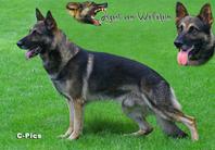 Agent vom Wolfsheim