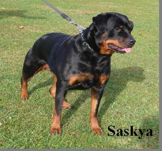 Saskya vom Hause Enzian