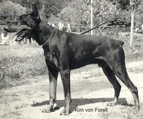 Kim von Forell