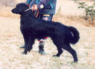Zeb av Trustenberg