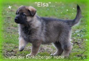 Elsa von der Dinkelberger Höhe