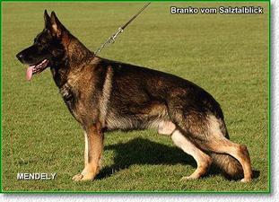 Branko vom Salztalblick