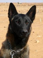Nergaard NPA Detection Dog