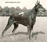 Danica-Stamms Juon