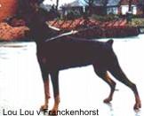 Lou Lou vom Franckenhorst