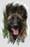 Furka LOSH 993329 (Persichetti)