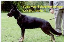 Yuma vom Schwartenzwinger