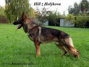 Hill z Holykova CS