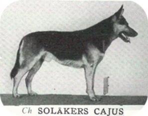 Solåkers Cajus