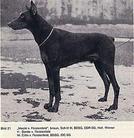 Meckie von Fürstenfeld