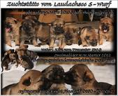 S Wurf vom Laudachsee 24 Tage alt