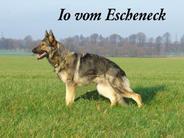 Io vom Escheneck