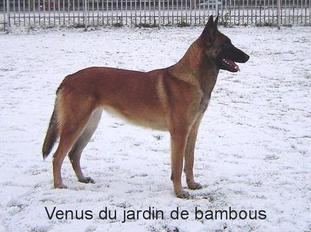 Venus II du Jardin de Bambous