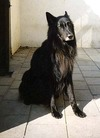 Wolf NHSB 1634612