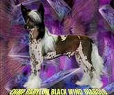 Babylon Black Wind Diabolo