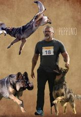 Peppino vom Heidhof