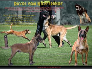 Davos vom Nilpferdhof