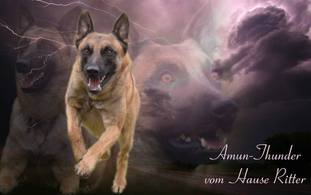Amun-Thunder vom Hause Ritter