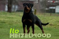 Heizelwood Ilo