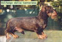 Volfango della Canterana