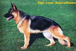Ida vom Aspenhaus