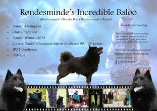 Røndesminde's incredible Baloo