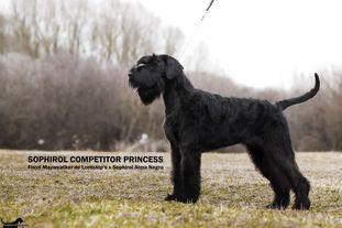 Sophirol Competitor Princess