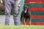 Dakota Legis Canis