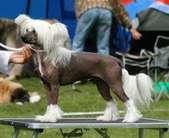 Proud Pony Eldorado
