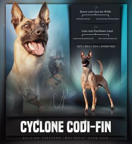 Cyclone Codi-Fin