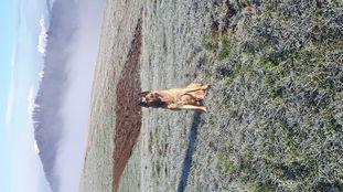 Eron Force Canina