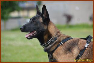 Zumba Marshall Dogs