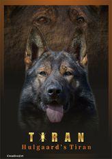 Hulgaard's Tiran