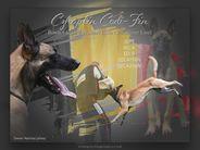 Czhaplin Codi-Fin