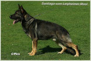 Santiago vom Leipheimer Moor