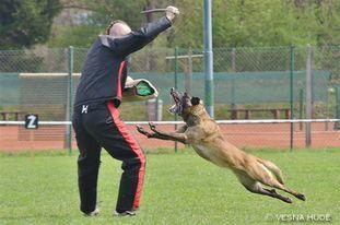 Carina Ajka Force Canina