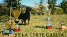 Wenka de la Corte Canina