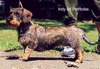 Indy od Petrboka