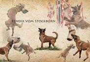 Bendix vom Stockborn